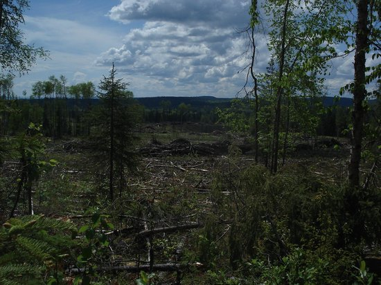 Fort George Canyon Provincial Park: clear cut logging right next to trail