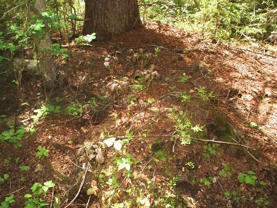 Fort George Canyon Provincial Park: squirrel midden