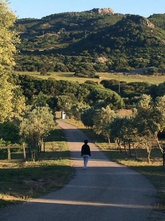 Agriturismo Saltara: Breathtaking surrounding country side - view from just outside our patio area