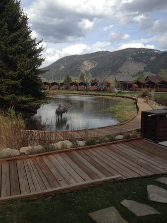 Rustic Inn Creekside Resort and Spa at Jackson Hole : walkway and pond moose is fake