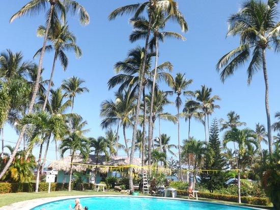 Hotel Residence Playa Colibri: Palm Trees