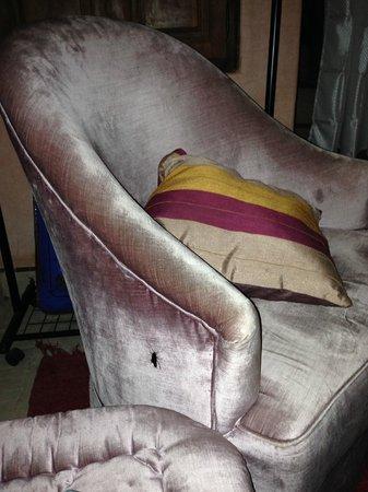 Dar Narjis: cockroach at the sofa