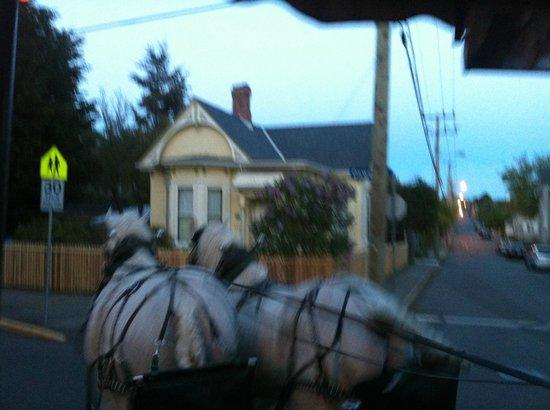 Victoria Carriage Tours: The horses Duke and Mike