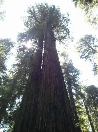 Hendy Woods State Park: beautiful, majestic redwoods!