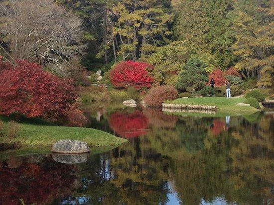 Asticou Azalea Garden: Fall colors