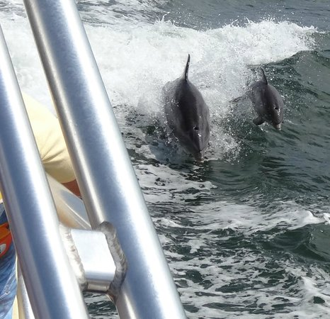 Thundercat Dolphin Watch: Dolphins following the boat