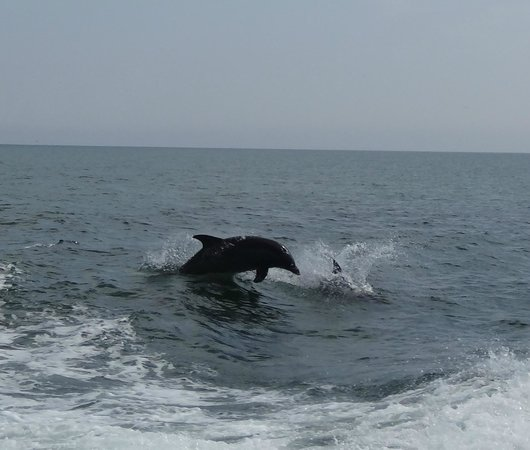 Thundercat Dolphin Watch: Dolphins showing off!