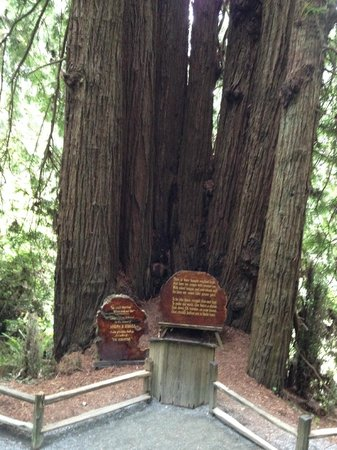 Trees of Mystery: Cathedral Trees - where weddings takes place.