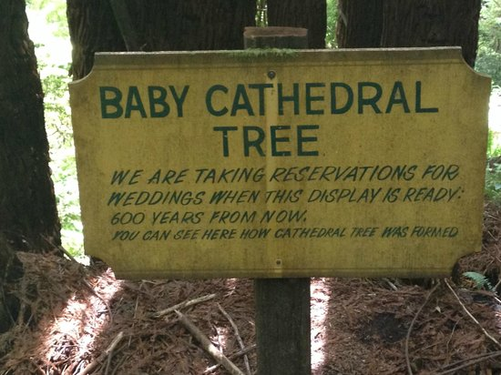 Trees of Mystery: Baby Cathedral trees