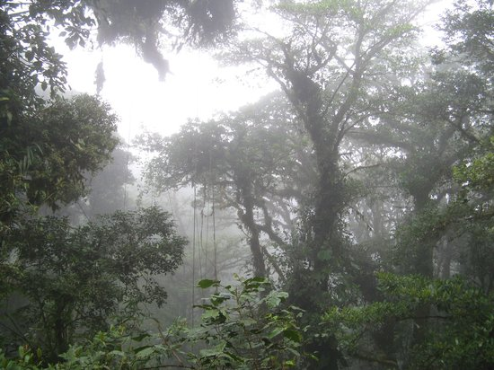 Monteverde Cloud Forest Biological Reserve: Beautiful Clouds in the jungle