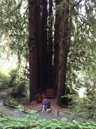 Trees of Mystery: Cathedral Trees - Wedding ceremony takes place here.