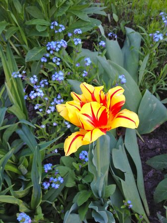 Barrie, Canada : Blooming spring flowers