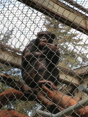 West Coast Game Park Safari: most animals are fenced in