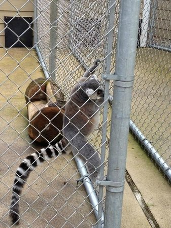 West Coast Game Park Safari: fenced in not allowed to touch