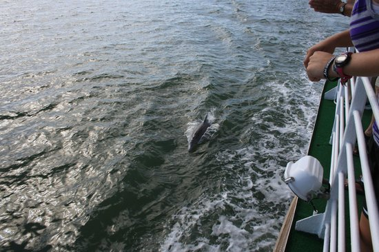 Captiva Cruises: dolphins!