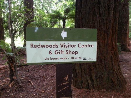 Redwoods, Whakarewarewa Forest : Redwoods Whakarewarewa Forest