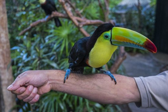Peace Lodge: Toucan