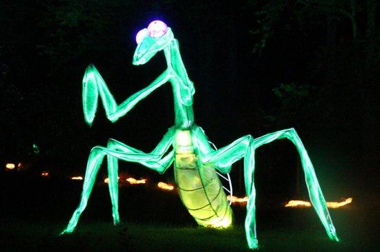 Van Cortlandt Manor: The Awesome Praying Mantis
