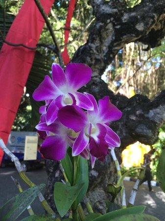 Hotel Kumala Pantai : Magnificent orchids woven through the trees