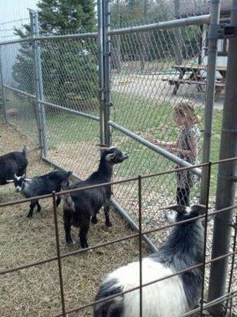 The Olde Dutch Restaurant & Banquet Haus: Petting zoo friends