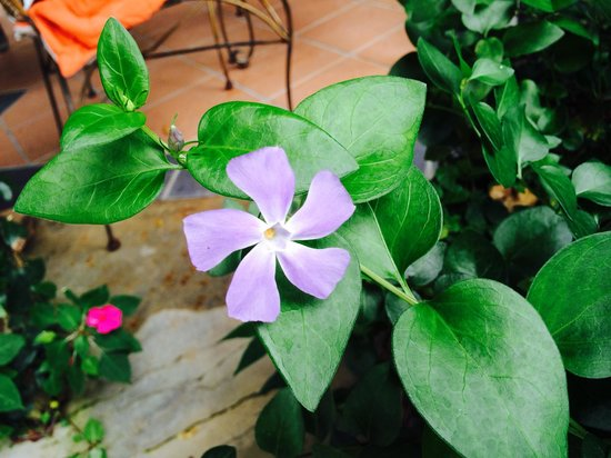 Jim Thompson's Tea Room at Bala's : Beautiful flower grown in the garden near our table