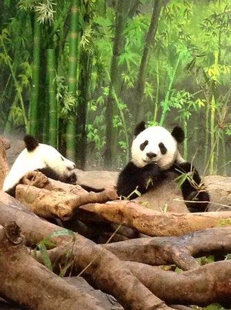 Guangzhou Zoo: обед в panda house