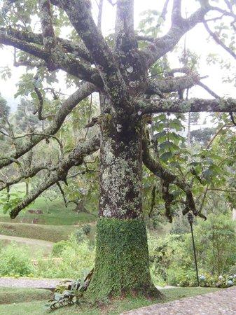 Pousada Casa Bonita : Bela árvore.