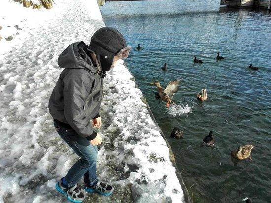 Hilton Queenstown Resort & Spa: Ducks