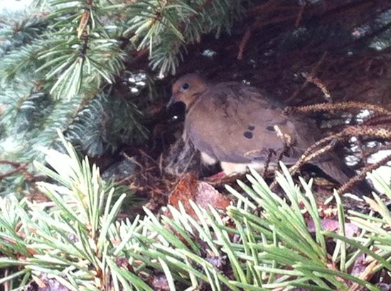 Motel Le Jolibourg: baby birds are coming soon in the tree near the reception!