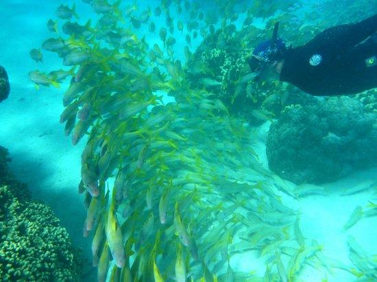 Makayla Palms: Snorkelling