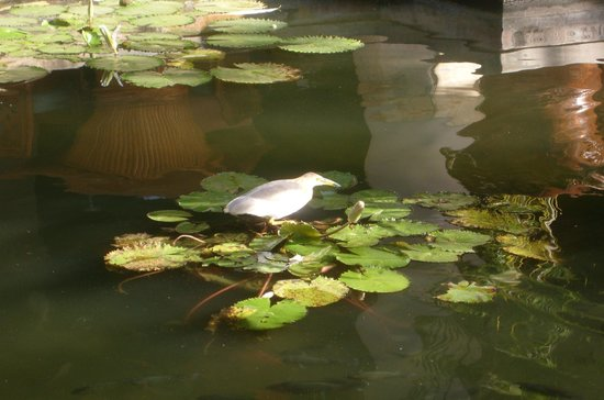 Nusa Dua Beach Hotel & Spa: Bird in the pond