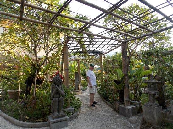 Poinciana Oceanside Resort & Retreat Centre: Poinciana gardens