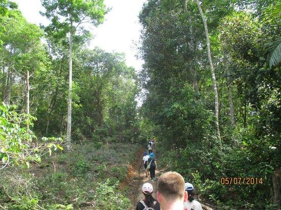 Telunas Beach Resort: Jungle hike
