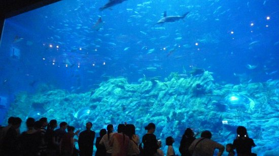 Metropark Hotel Kowloon: Aquarium at Ocean Park