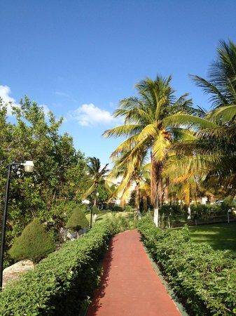 Cancun Clipper Club : Garden