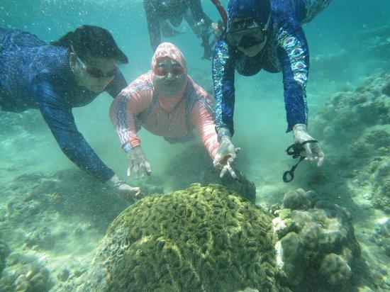 Cocotinos Manado: Snorkelling in Bunaken