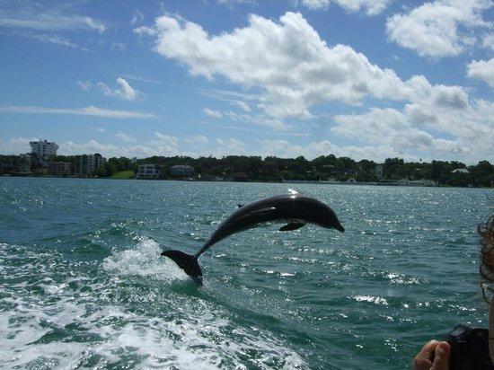 Little Toot Dolphin Adventures: Dolphin ahoy