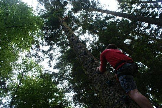 Parc d'Aventures du Nideck: escalade arbre