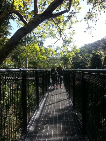 Tamborine Rainforest Skywalk: Refreshing walk ;)
