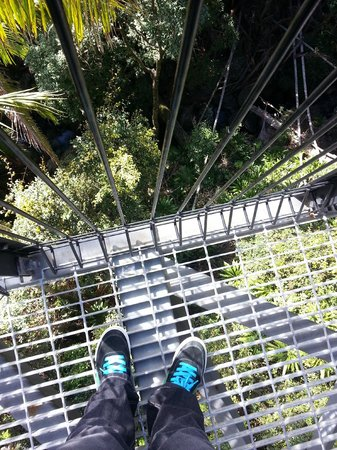 Tamborine Rainforest Skywalk: Refreshing walk ;)