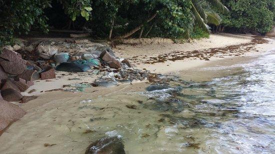 Coco de Mer - Black Parrot Suites : Müll an der Promenade
