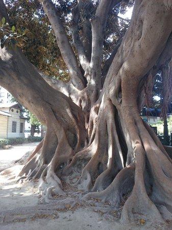 Valencia Mindfulness Retreat: Omgeving oude centrum.