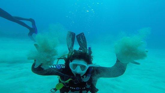 Island Divers Hawaii: Diving #3