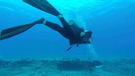 Island Divers Hawaii: Diving #4