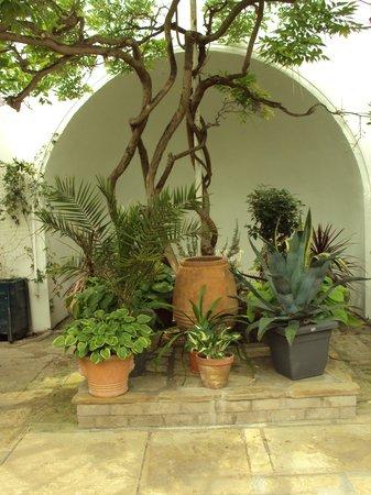 Kailzie Gardens: in the greenhouse