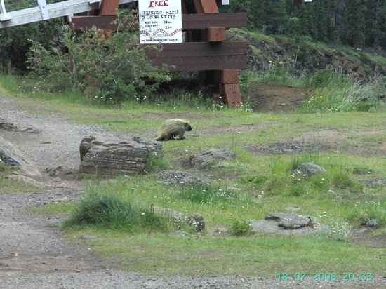 Miles Canyon : Porcupine