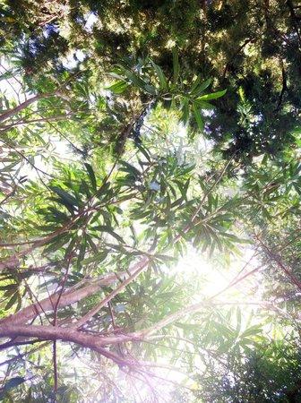 Can Furios Hotel: Blick in die Bäume im Garten