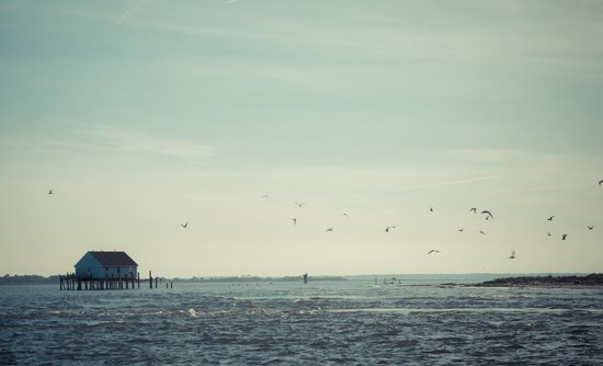 Daisey's Island Cruises : view
