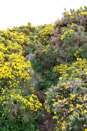The Bray to Greystones Cliff Walk: Flowers along the way