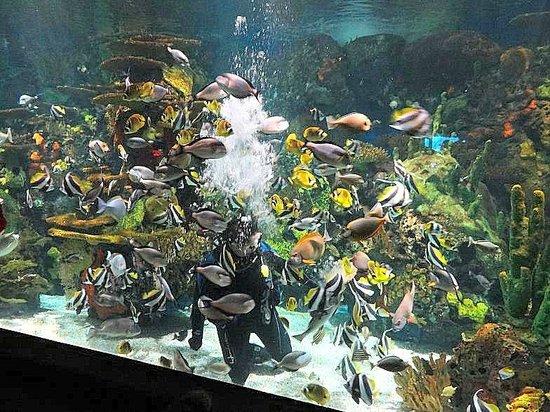Ripley's Aquarium : diver in tank